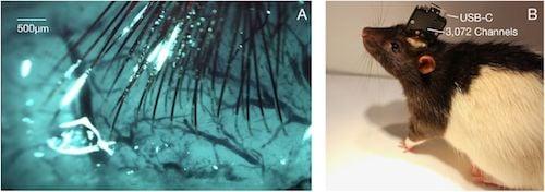usb-ratte-neuralink