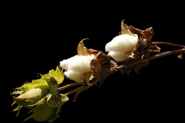 Nachhaltige Lösungen in der Textilindustrie